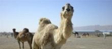 Maroko  - wczasy, urlopy, wakacje