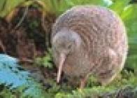 Przygoda W Krainie Kiwi - wczasy, urlopy, wakacje