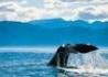 Wyspa Północna I Południowa - Fly&drive - wczasy, urlopy, wakacje