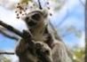 Madagaskar - Wyspa Tysiąca Lemurów - wczasy, urlopy, wakacje