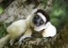 Madagaskar - W Krainie Lemurów - wczasy, urlopy, wakacje