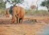 Namibia - Botswana - Zimbabwe - wczasy, urlopy, wakacje