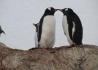 Antarktyczna Przygoda - wczasy, urlopy, wakacje