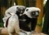 Odkryj Północny Madagaskar - wczasy, urlopy, wakacje